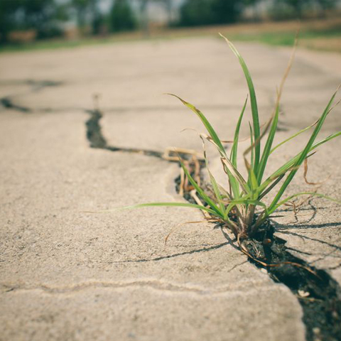 grass growing in the cracks of a driveway